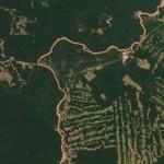 Abholzung (NASA)