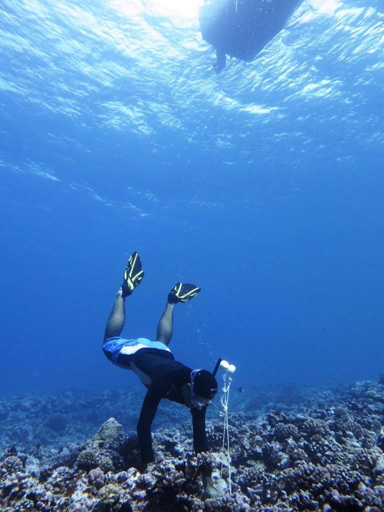 So brachten die Forscher auf Moorea die Mikrophone Unterwasser an.