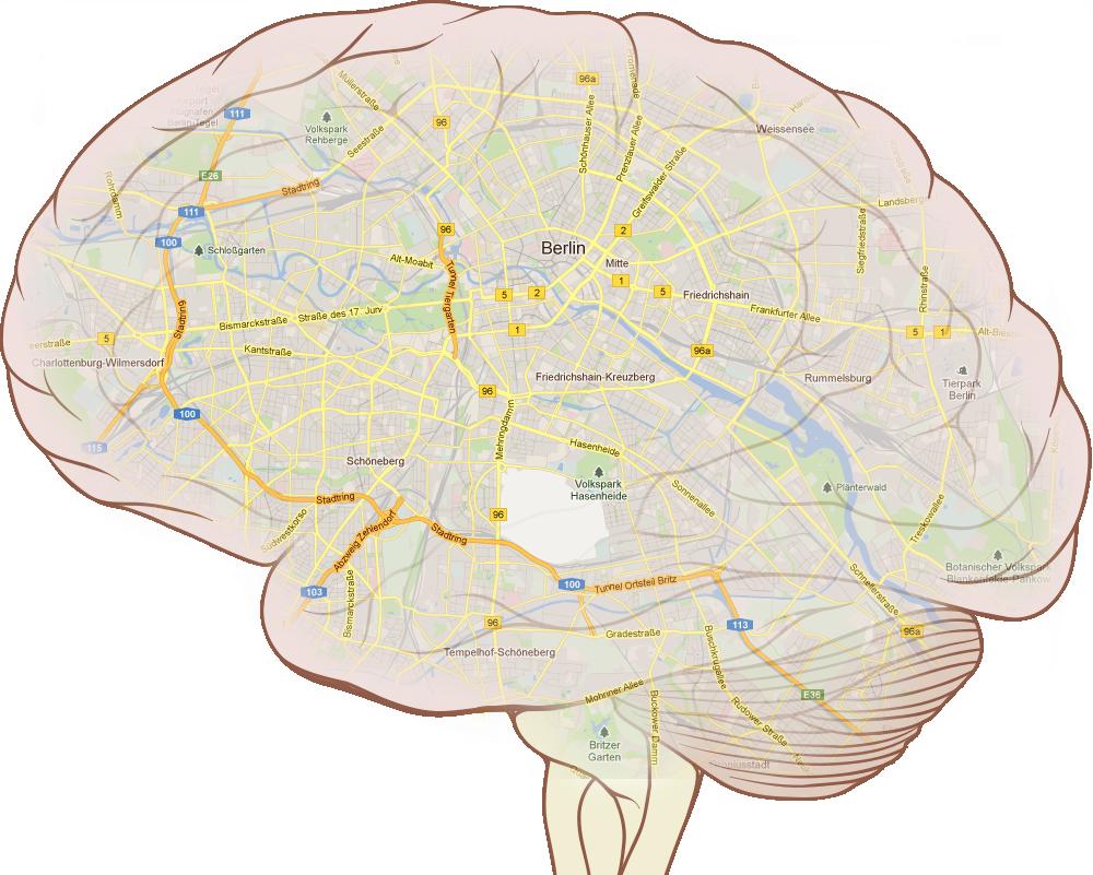 Was ist das Gehirn? » Graue Substanz » SciLogs - Wissenschaftsblogs