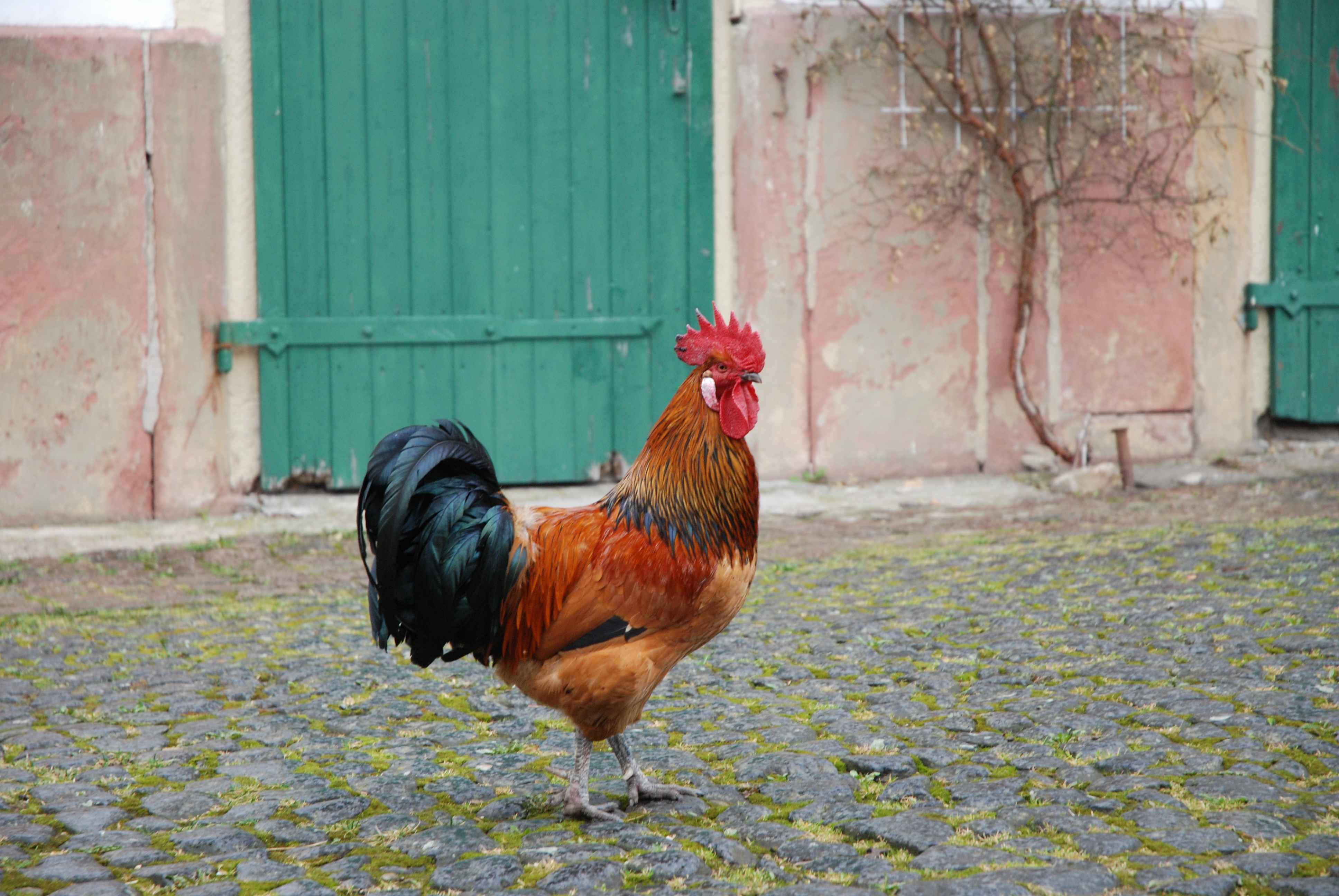 Fat Gromutter saugt auf einem Hahn - debxumcom