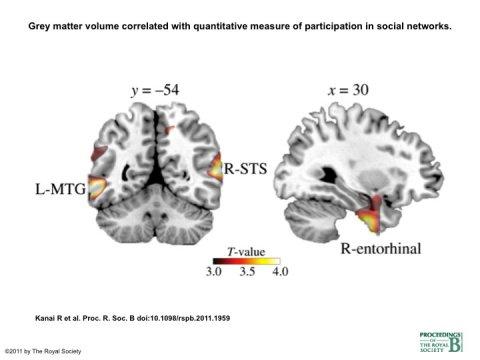 Das Social Media Gehirn » Quantensprung » SciLogs - Wissenschaftsblogs