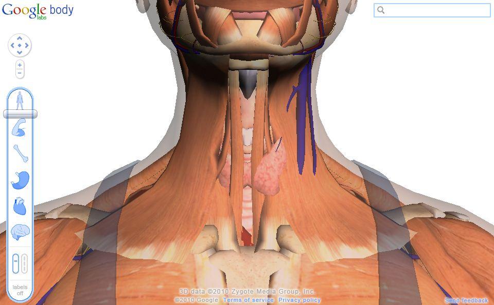 Body Grauser » Anatomisches Allerlei » SciLogs - Wissenschaftsblogs
