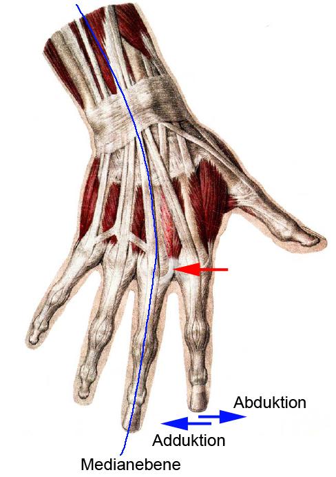 Der sophistische Finger » Anatomisches Allerlei » SciLogs