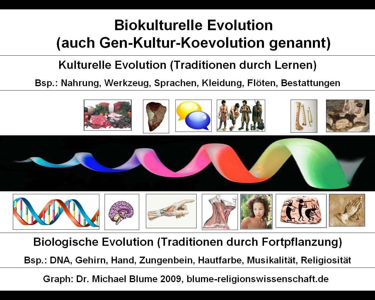 biokulturelle evolution natur des glaubens scilogs wissenschaftsblogs - Koevolution Beispiele