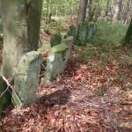 Zwischen Heidelbeerbüschen, Laub- und Nadelbäumen säuberlich arrangiert: Eine Reihe von vertikal ins Erdreich eingelassenen Sandsteinplatten auf einem von einem steilen Wall, mitten im Wald.