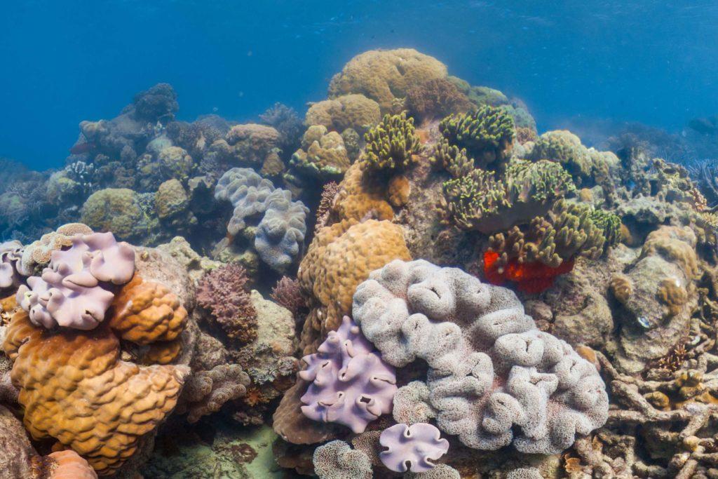 Zukunftsoptionen für Korallenriffe – vielfältiges Handeln und langer Atem sind nötig
