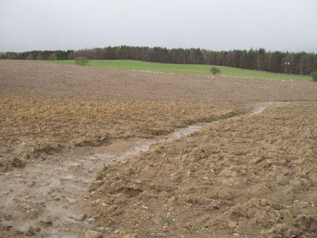 Pflügen begünstigt Bodenerosion, etwa durch ablaufendes Wasser. (Bild: RIchard Webb)