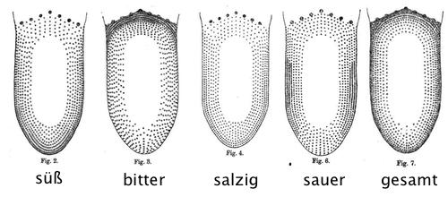 Die vier klassischen Geschmacksrichtungen, kartiert von D. P. Hänig.