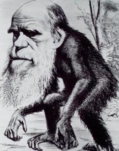darwinalsaffeweb