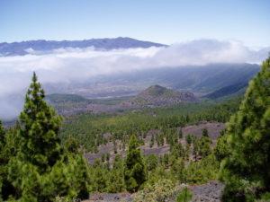 Blick vom Cumbre Vieja in einen mit Koniferen bewachsenen Vulkankrater