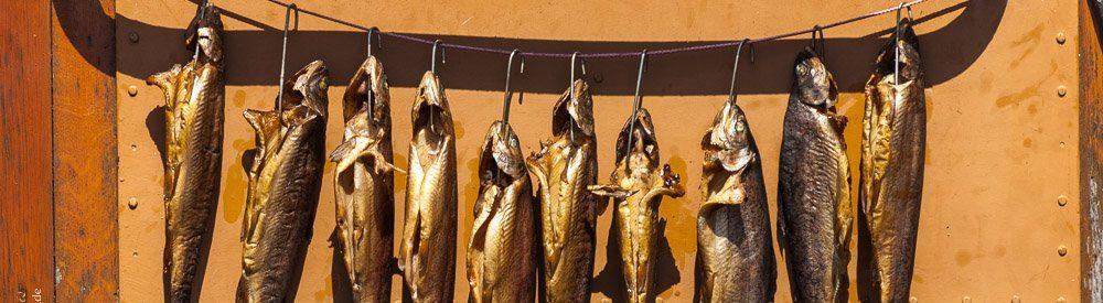 Fischblog