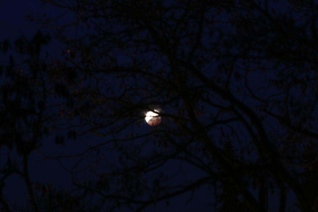 Die Mondfinsternis am Morgen des 21.1.2019. Der Mond ist schon deutlich in den Halbschattenkegel der Erde eingetreten und ist bereits dicht über dem Horizont. Canon EOS6D mit Leica Elmarit-R 180 mm