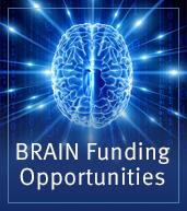 BRAIN Funding Opportunities (badge)