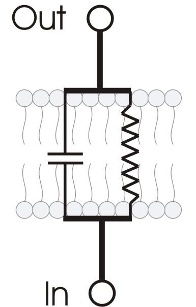 RC_membrane_circuit