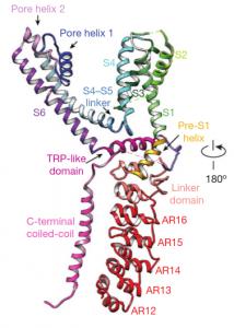 Strukturdetail des TRPA1-Kanals.