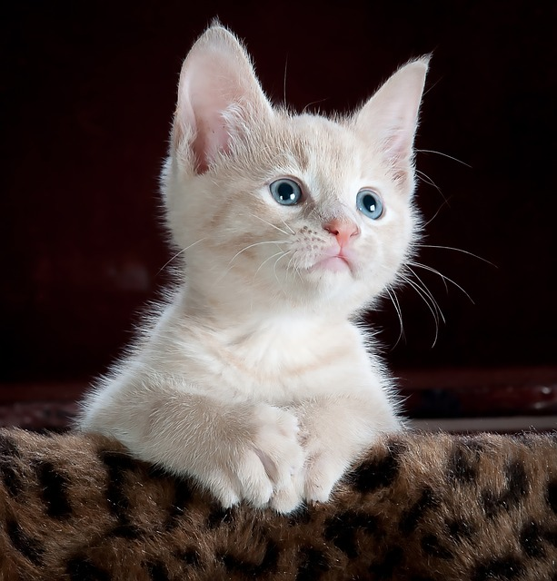 Photo of a cute kitten