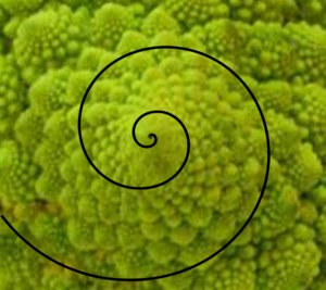 Spiral on Romanesco broccoli - image from fermilab.ch