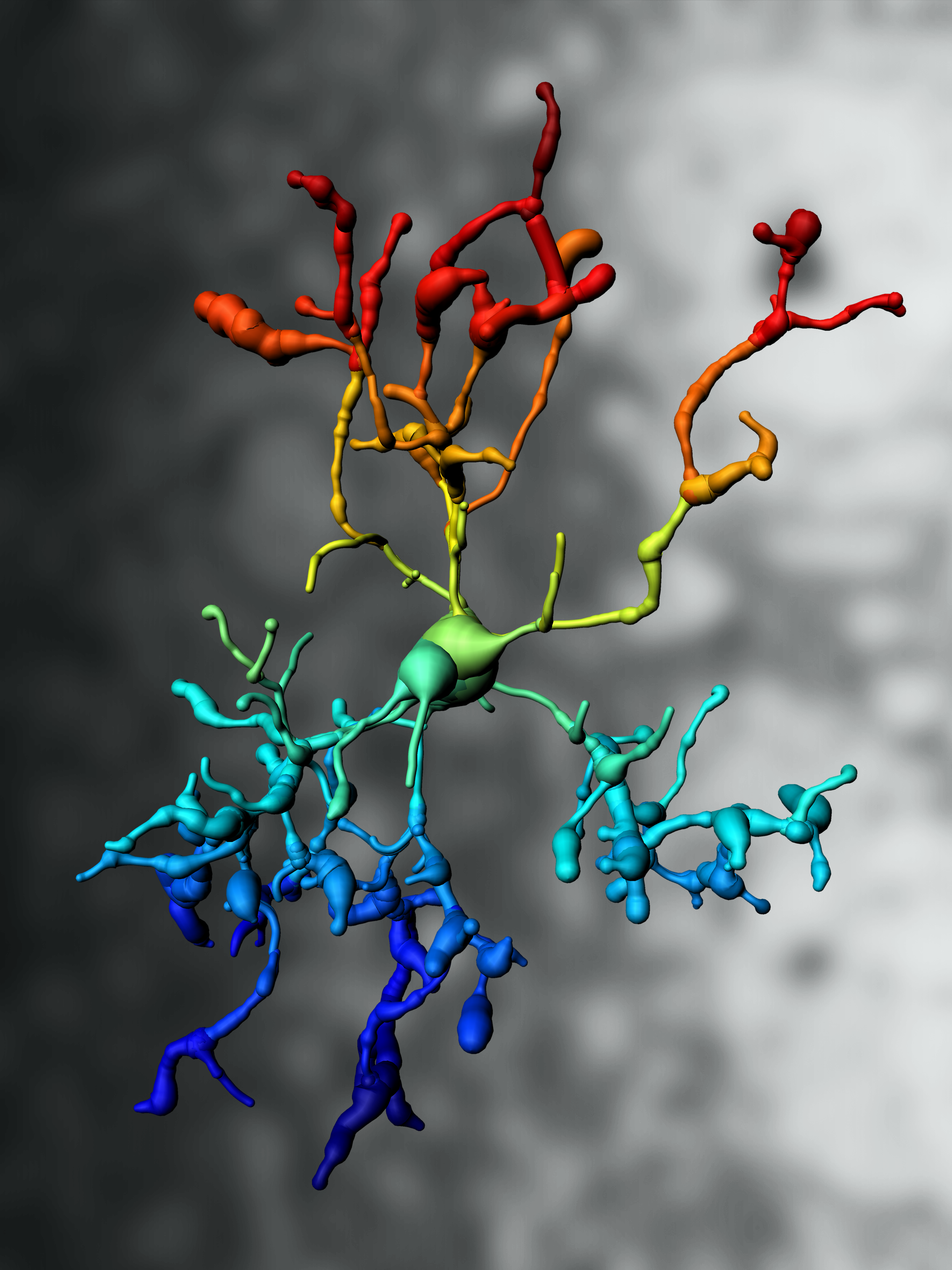 Wächter des Gehirns - kleine Zellen mit großer Wirkung » KlarText ...