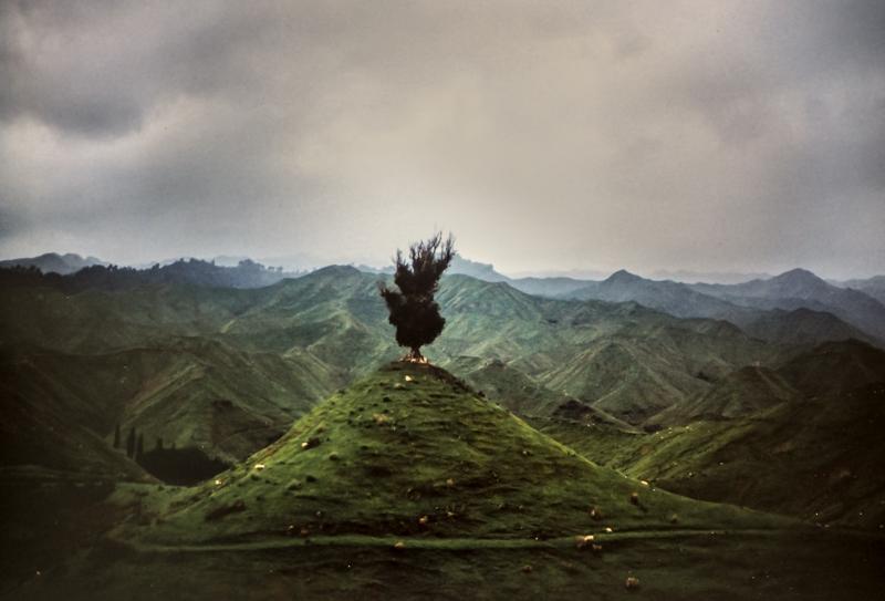 Raum für mehr Bäume? Schafland in Neuseeland auf abgeholzten Flächen.