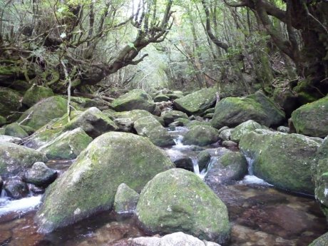 Yakushima island hiking trail, Source: Michael Khan