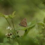 Schmetterling auf Pflanze