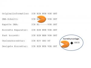 Informations-Editierung