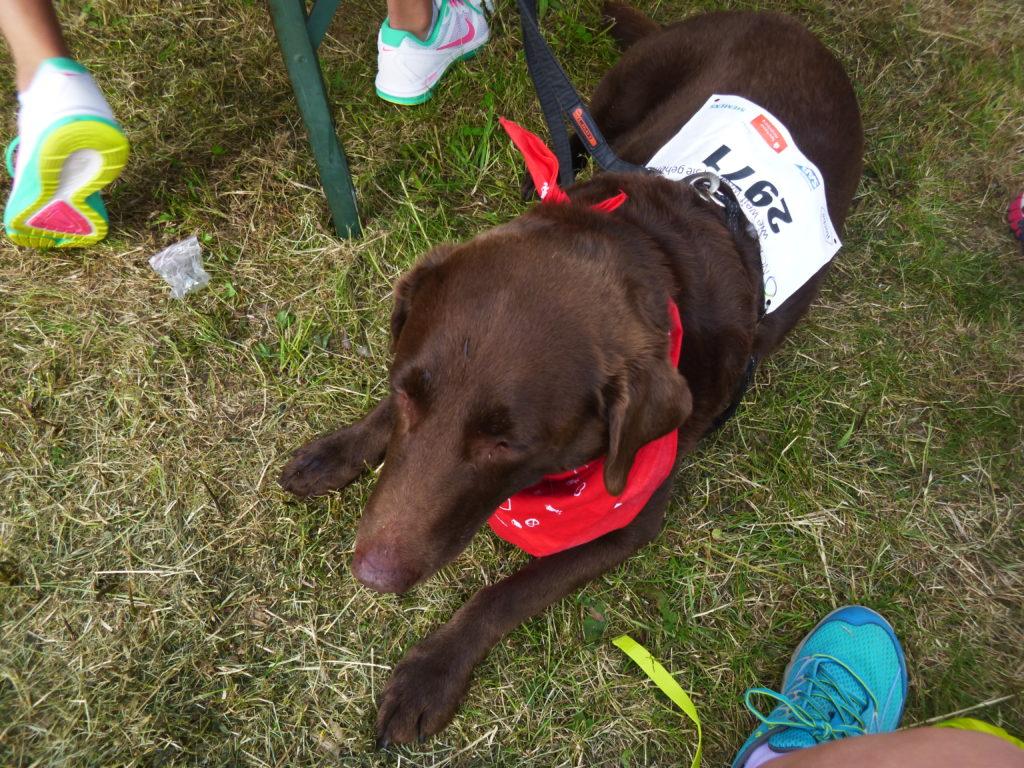 Lissy Labrador aka Frollein Hund.
