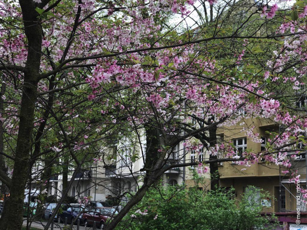 Cerezos en flor en Berlín. Los árboles hacen que la ciudad se transforme en un lugar aún más especial.