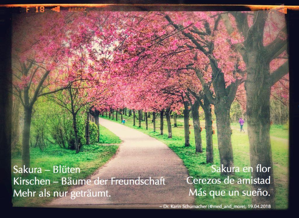 Sakura en flor -ein Haiku für meine Freunde. Deutsche Version: Sakura - Blüten / Kirschen - Bäume der Freundschaft / mehr als nur geträumt.