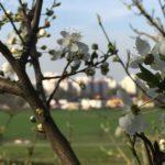 Frühling auf der Lübarser Höhe