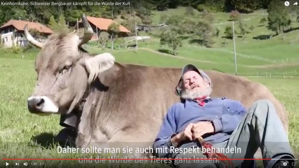 Kleinhornkühe: Schweizer Bergbauer kämpft für die Würde der Kuh (spiegeltv)