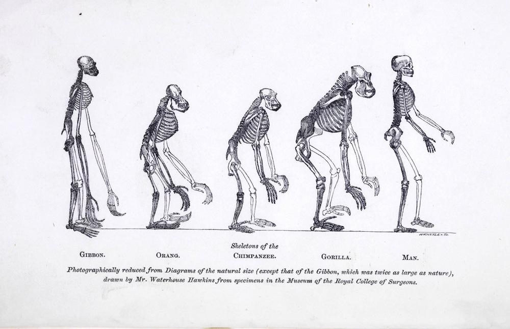 Wie ähnlich sind Tiere und Menschen? » MENSCHEN-BILDER » SciLogs ...
