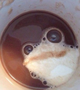 Kaffeefrosch