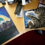 Katze und Puzzle