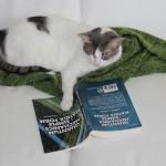 Katze mit Quantenmechanik-Buch