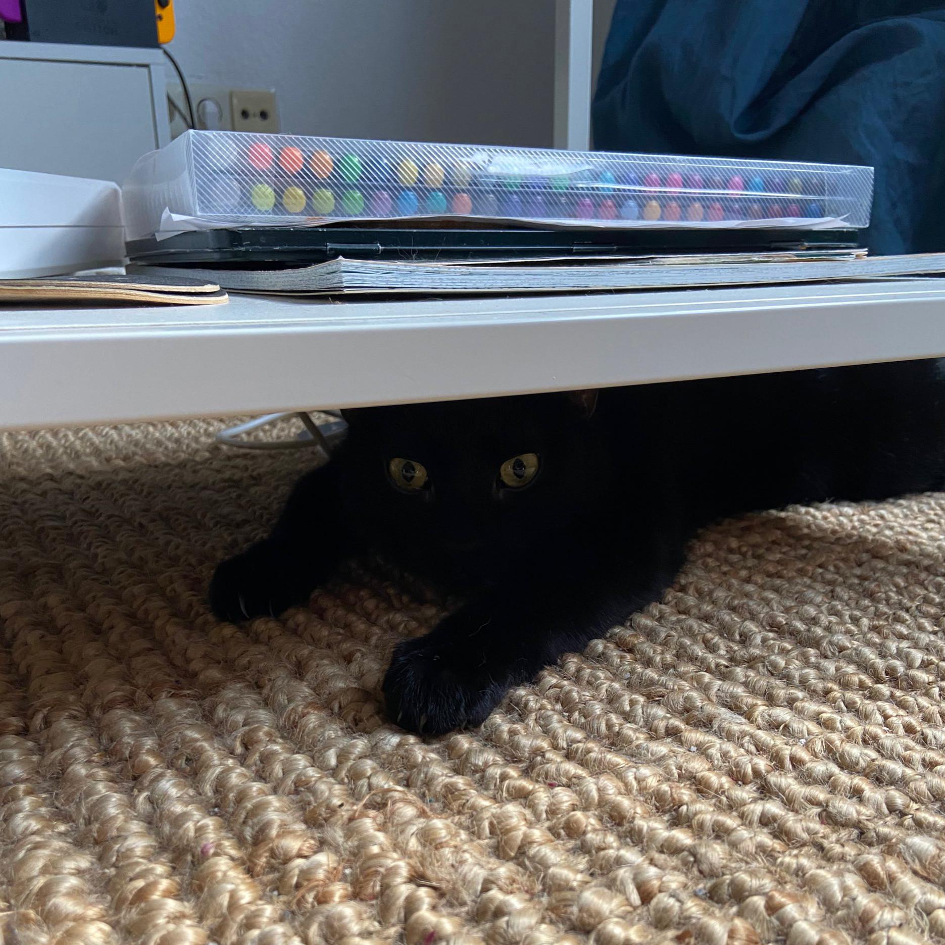 Könnte stellenweise auch ein Schwarzes Loch sein, ist aber eine Katze. Vermutlich frei von Singularitäten.