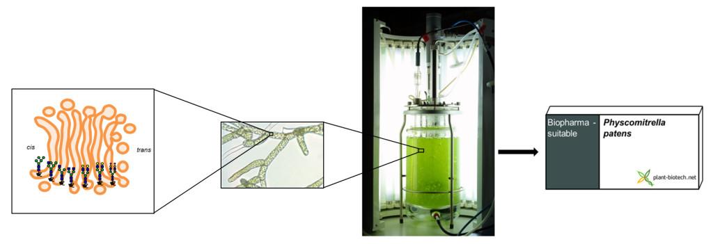 Produktion eines Biopharmazeutika in der Moosfabrik