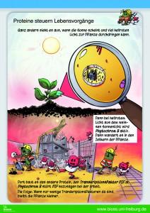 Poster 2 BIOSS Phytochrom B Pflanzenbiologie Wissenschaftsmarkt