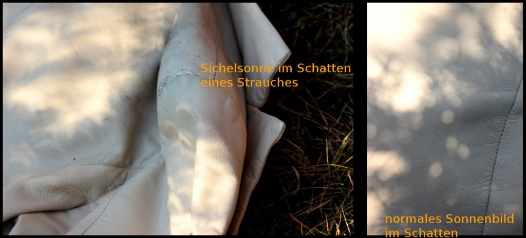 Sichelsonne in Projektion durch den Schatten eines Nadelgewächses.