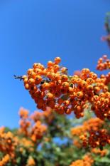 orange_Himmel_web