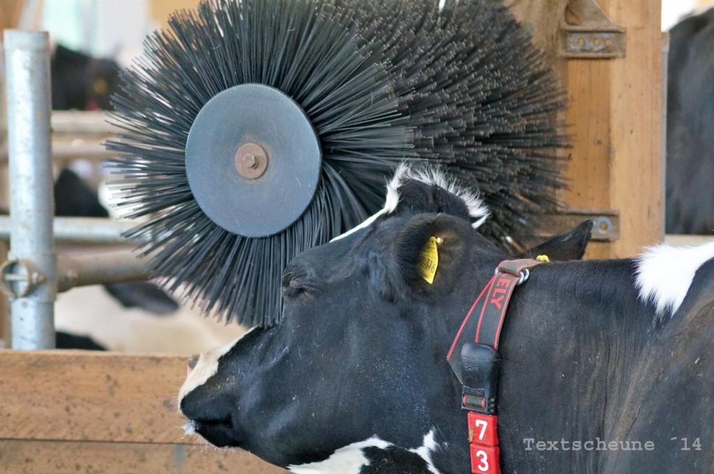Kuh mit Bürste
