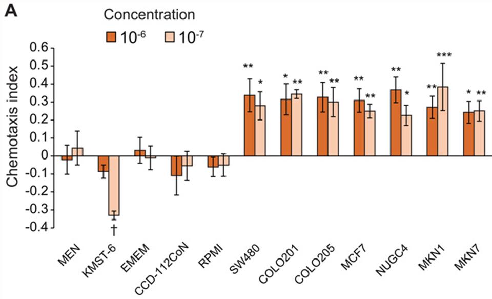 Chemotaxis Analyse von C.elegans mit Medienüberständen verschiedern Kontroll- und Krebszelllinien