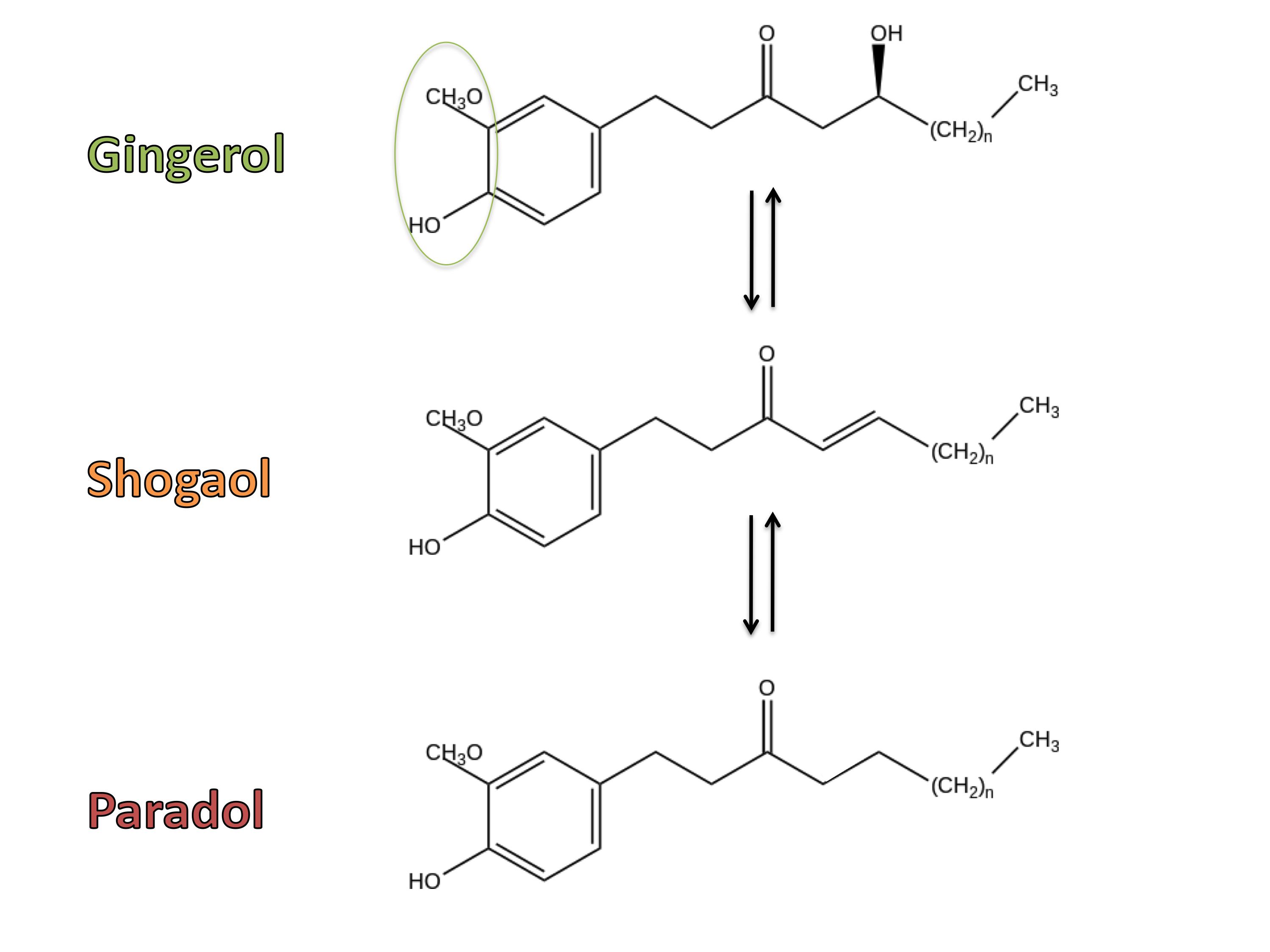 Gingerol-Shogaol-Paradol