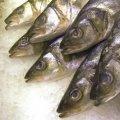 Fische (Foto: Rainer Sturm/Pixelio)