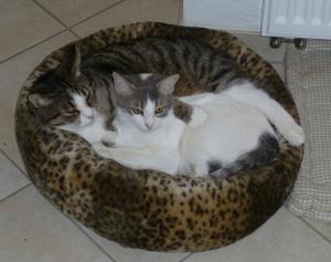 Meine Katzen im Körbchen