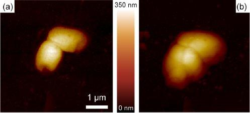 Auswirkung von der Plasmatorch auf E.Coli-Bakterien - aus René Pompl et al 2009 New J. Phys. 11 115023