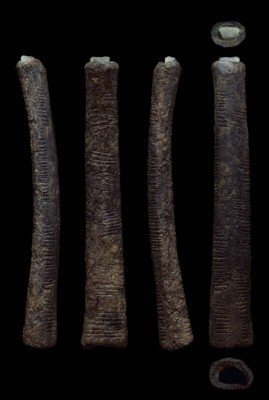 The Ishango bone (Four views: photo by Patrick Semal; copyright = Royal Belgian Institute of natural Sciences)