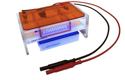 gel_electrophoresis.jpg