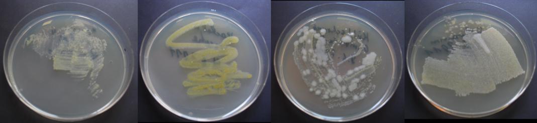 kulturwochenende bakterien und pilze im haushalt fischblog scilogs wissenschaftsblogs. Black Bedroom Furniture Sets. Home Design Ideas
