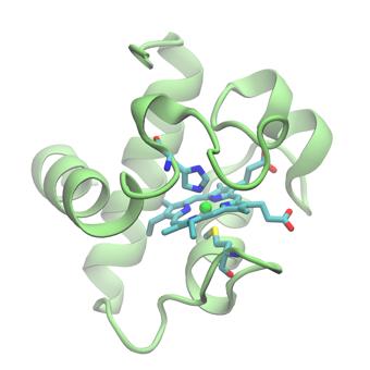 Cytochrome c6 from Chlamydomonas reinhardtti